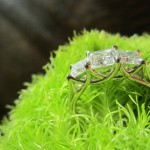 Carolyn's Magnificent Shot Showing the Side View Detail of her new Brian Gavin Ring