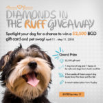 Celebrate Your Dog and Enter to Win the Ultimate Pet Package